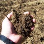 SoilSample10302014
